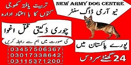 army dog center in rawalpindi - army dog center okara