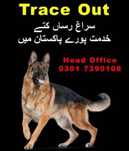 Dog Center Contact Number - Rawalpindi